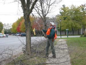 Arborist Working on tree