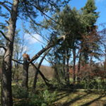 Wind Damaged Tree