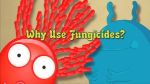 why use fungicides