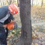 Homeowner Tree Care Accidents