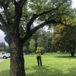 Why Tree Inspections?