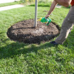 Start Preparing Trees for Winter and Next Year