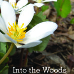 Early Spring in the Woods