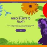 Which plants to plant