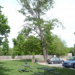 Trees should be inspected for defects which pose a threat or risk to targets.