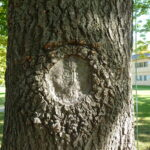 Complete wound closure improves tree health and slows decay.