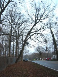 Leaning trees can be a risk to neighboring property owners.