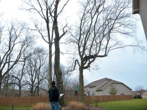 An ISA certified arborist can provide mitigation options that are best for the tree and helpful for the tree owner.