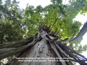 Trees make a difference in our lives, every day.
