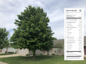 Find out what your tree is worth in benefits.
